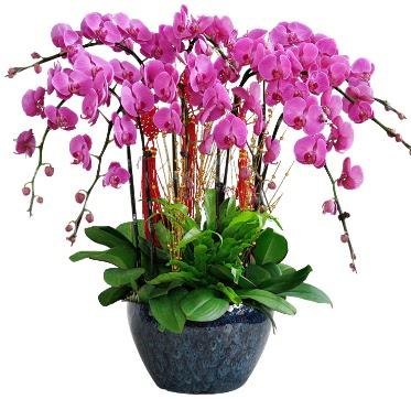 9 dallı mor orkide  Edirne İnternetten çiçek siparişi