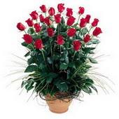 Edirne çiçek yolla , çiçek gönder , çiçekçi   10 adet kirmizi gül cam yada mika vazo
