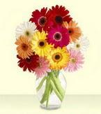 Edirne çiçek siparişi sitesi  cam yada mika vazoda 15 özel gerbera