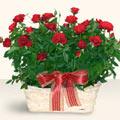 Edirne internetten çiçek satışı  11 adet kirmizi gül sepette