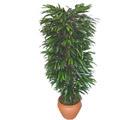 Edirne hediye sevgilime hediye çiçek  Özel Mango 1,75 cm yüksekliginde