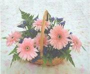 gerbera çiçeklerinde sepet   Edirne internetten çiçek siparişi
