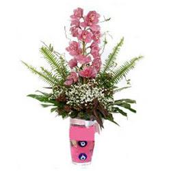 Edirne 14 şubat sevgililer günü çiçek  cam yada mika vazo içerisinde tek dal orkide çiçegi