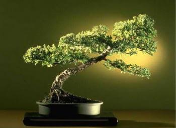 ithal bonsai saksi çiçegi  Edirne anneler günü çiçek yolla