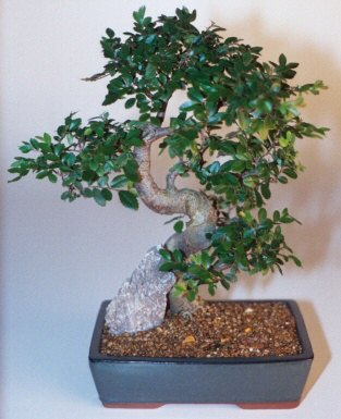 Edirne çiçekçiler  ithal bonsai saksi çiçegi  Edirne hediye sevgilime hediye çiçek