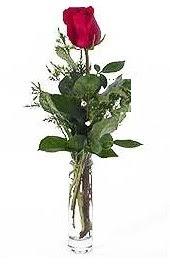 Vazo içerisinde 1 adet kirmizi gül  Edirne online çiçekçi , çiçek siparişi