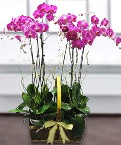 4 dallı mor orkide  Edirne ucuz çiçek gönder