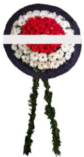 mozele çiçeği  Edirne çiçek yolla