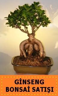 Ginseng bonsai satışı japon ağacı  Edirne yurtiçi ve yurtdışı çiçek siparişi