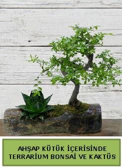 Ahşap kütük bonsai kaktüs teraryum  Edirne çiçek mağazası , çiçekçi adresleri