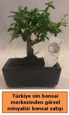 Japon ağacı bonsai satışı ithal görsel  Edirne internetten çiçek siparişi