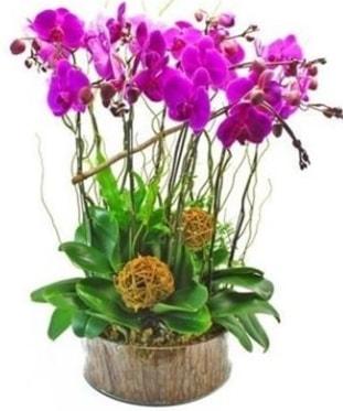 Ahşap kütükte lila mor orkide 8 li  Edirne çiçek online çiçek siparişi