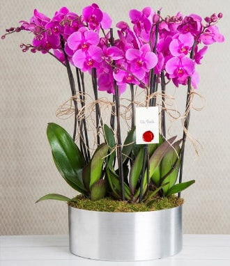 11 dallı mor orkide metal vazoda  Edirne çiçekçiler