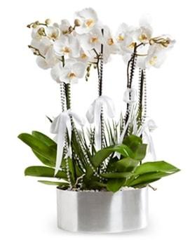 Beş dallı metal saksıda beyaz orkide  Edirne internetten çiçek siparişi