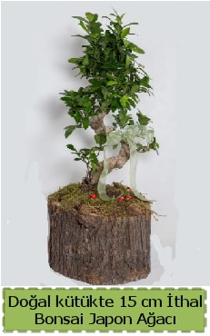Doğal kütükte İthal bonsai japon ağacı  Edirne çiçek siparişi vermek