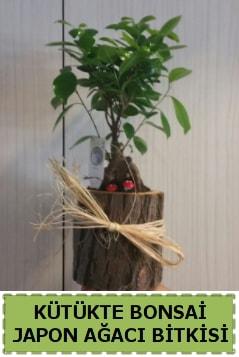 Kütük içerisinde doğal bonsai ağacı  Edirne online çiçek gönderme sipariş
